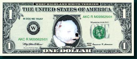 Dollar - West Highland White Terrier